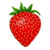 Ακατέργαστη φράουλα, τρισδιάστατο σκαλί Διανυσματική απεικόνιση, συνδετήρας-τέχνη, που απομονώνεται στο άσπρο υπόβαθρο στοκ εικόνα με δικαίωμα ελεύθερης χρήσης