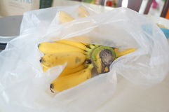 Ακατέργαστη ώριμη έννοια φρούτων φύλλων φυτών δέντρων μπανανών Στοκ φωτογραφία με δικαίωμα ελεύθερης χρήσης