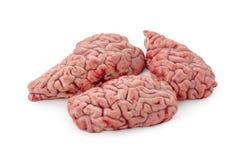 Ακατέργαστος εγκέφαλος σε ένα άσπρο υπόβαθρο που απομονώνεται Στοκ Εικόνες