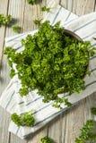 Ακατέργαστος πράσινος οργανικός σγουρός μαϊντανός Στοκ Εικόνες