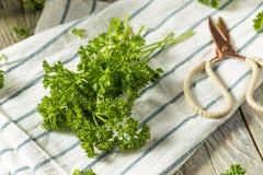 Ακατέργαστος πράσινος οργανικός σγουρός μαϊντανός Στοκ εικόνα με δικαίωμα ελεύθερης χρήσης