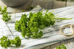 Ακατέργαστος πράσινος οργανικός σγουρός μαϊντανός Στοκ εικόνες με δικαίωμα ελεύθερης χρήσης