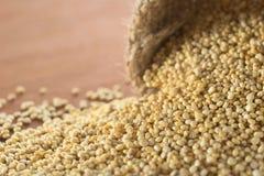 Ακατέργαστο άσπρο Quinoa Στοκ εικόνες με δικαίωμα ελεύθερης χρήσης