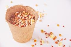 Ακατέργαστο βλαστημένο μικρόβιο δημητριακών για τα υγιή τρόφιμα σε ένα δοχείο στοκ φωτογραφία με δικαίωμα ελεύθερης χρήσης