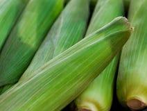 Ακατέργαστο καλαμπόκι με τα πράσινα φύλλα Στοκ φωτογραφία με δικαίωμα ελεύθερης χρήσης