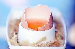 Ακατέργαστο καφετί αυγό κοτόπουλου Στοκ Εικόνα