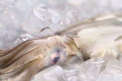 Ακατέργαστο καλαμάρι στον πάγο Στοκ φωτογραφία με δικαίωμα ελεύθερης χρήσης