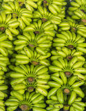 Ακατέργαστο πράσινο υπόβαθρο σχεδίων σωρών μπανανών Στοκ Εικόνα
