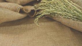 Ακατέργαστο ρύζι στον καμβά στοκ εικόνες