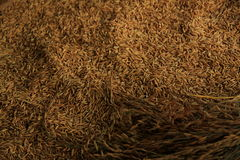 ακατέργαστο ρύζι Στοκ Εικόνα
