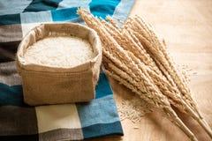 Ακατέργαστο σιτάρι ρυζιού και ξηρό φυτό ρυζιού στο ξύλινο επιτραπέζιο υπόβαθρο Στοκ εικόνες με δικαίωμα ελεύθερης χρήσης
