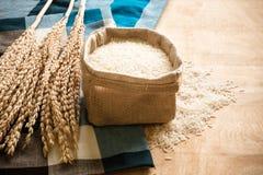 Ακατέργαστο σιτάρι ρυζιού και ξηρό φυτό ρυζιού στο ξύλινο επιτραπέζιο υπόβαθρο Στοκ Εικόνες