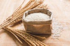 Ακατέργαστο σιτάρι ρυζιού και ξηρό φυτό ρυζιού στο ξύλινο επιτραπέζιο υπόβαθρο Στοκ Εικόνα