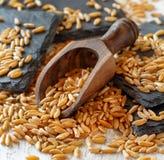 Ακατέργαστο σιτάρι Kamut σε ένα ξύλινο κύπελλο στοκ εικόνα
