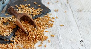 Ακατέργαστο σιτάρι Kamut στοκ φωτογραφία με δικαίωμα ελεύθερης χρήσης
