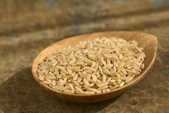 Ακατέργαστο Wholegrain ρύζι Στοκ Φωτογραφίες