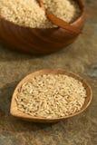 Ακατέργαστο Wholegrain ρύζι Στοκ εικόνες με δικαίωμα ελεύθερης χρήσης