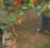 Ακιδωτή πορτοκαλιά αράχνη Στοκ εικόνες με δικαίωμα ελεύθερης χρήσης