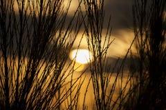 Ακιδωτοί θάμνοι στοκ φωτογραφία με δικαίωμα ελεύθερης χρήσης