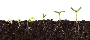 ακολουθία φυτών σακακιών στοκ φωτογραφία με δικαίωμα ελεύθερης χρήσης