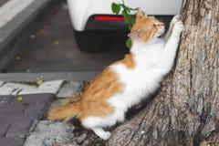 Ακονίζοντας νύχια γατών πιπεροριζών ενάντια σε έναν κορμό δέντρων Στοκ φωτογραφίες με δικαίωμα ελεύθερης χρήσης