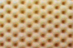 Ακουστικό σφουγγάρι αφρού Στοκ εικόνα με δικαίωμα ελεύθερης χρήσης