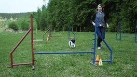 Ακολουθία με το σε αργή κίνηση αγώνα σε ανταγωνισμό, ζωική φυλή ευκινησίας με το σκυλί που τρέχει και που κάνει slalom Ακολουθία  απόθεμα βίντεο