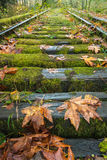 Ακολουθεί το φθινόπωρο στοκ φωτογραφία με δικαίωμα ελεύθερης χρήσης