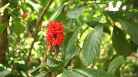 Ακολουθώντας πυροβολισμός ενός όμορφου κόκκινου λουλουδιού στους βοτανικούς κήπους απόθεμα βίντεο