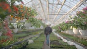 Ακολουθώντας πυροβολισμός στις εγκαταστάσεις λουλουδιών απόθεμα βίντεο