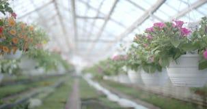 Ακολουθώντας πυροβολισμός στις εγκαταστάσεις λουλουδιών φιλμ μικρού μήκους