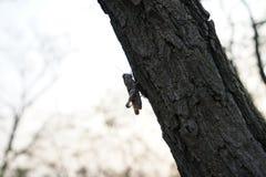 ακρίδα και δέντρο το φθινόπωρο Στοκ Εικόνες