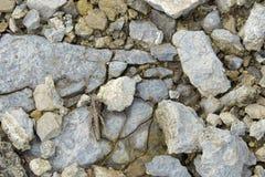 Ακρίδα στις πέτρες Στοκ Εικόνες