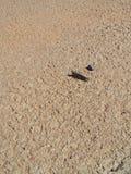 ακρίδα σε μια οδό Στοκ φωτογραφία με δικαίωμα ελεύθερης χρήσης