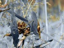 Ακρίδα στη χλόη Στοκ Εικόνες