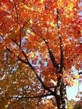 Ακραίος στενός επάνω ενός δέντρου το φθινόπωρο στοκ εικόνες