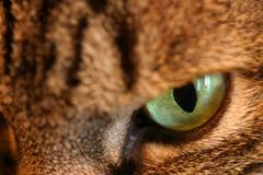 ακραίος τιγρέ στοκ φωτογραφίες με δικαίωμα ελεύθερης χρήσης