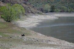 Ακραίο ξηρασία βοοειδή όρων †«που στηρίζονται εκτός από μια κενή δεξαμενή στοκ φωτογραφία