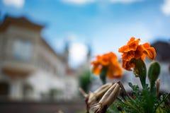 Ακριβώς ένα απλό πορτοκαλί λουλούδι Στοκ φωτογραφίες με δικαίωμα ελεύθερης χρήσης