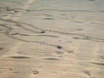 Ακριβώς εκκολαμμένη πράσινη βιασύνη χελωνών μωρών στη θάλασσα - 6 στοκ φωτογραφία με δικαίωμα ελεύθερης χρήσης
