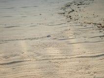 Ακριβώς εκκολαμμένη πράσινη βιασύνη χελωνών μωρών στη θάλασσα - 3 στοκ εικόνα