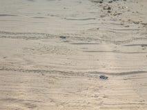 Ακριβώς εκκολαμμένη πράσινη βιασύνη χελωνών μωρών στη θάλασσα - 7 στοκ εικόνες με δικαίωμα ελεύθερης χρήσης
