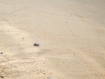 Ακριβώς εκκολαμμένη πράσινη βιασύνη χελωνών μωρών στη θάλασσα - 8 στοκ φωτογραφίες με δικαίωμα ελεύθερης χρήσης