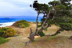 Ακροθαλασσιά δέντρων το δύσκολο κυρτό μπλε ουρανού κορμών ανεμοθύελλας στοκ εικόνα με δικαίωμα ελεύθερης χρήσης