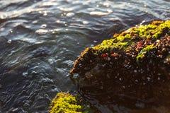 Ακροθαλασσιά της Μαύρης Θάλασσας στη Βουλγαρία Στοκ Φωτογραφία