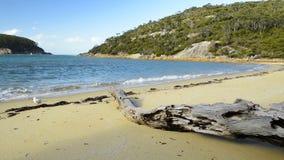 Ακρωτήριο Αυστραλία Wilsons απόθεμα βίντεο