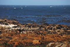Ακρωτήριο της Αφρικής των καλών βράχων ελπίδας με τις σφραγίδες και τα πουλιά Στοκ φωτογραφία με δικαίωμα ελεύθερης χρήσης