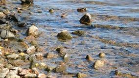 Ακτές μιας λίμνης με το βράχο απόθεμα βίντεο