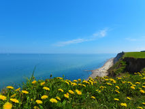 Ακτή απότομων βράχων και η θάλασσα της Βαλτικής με την πικραλίδα Στοκ Φωτογραφίες