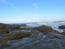 ακτή Κασπιών Θάλασσα Ρωσία Στοκ Φωτογραφίες